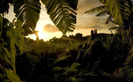 vegetal sunset